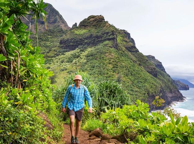 Caminhante na trilha em plantação de palmeiras, havaí, eua