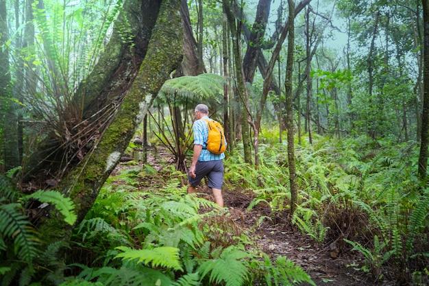 Caminhante na trilha na selva verde, havaí, eua