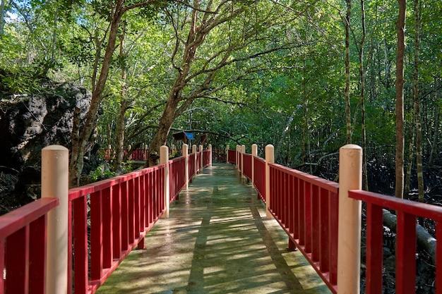 Caminhe pela floresta de mangue na ásia.