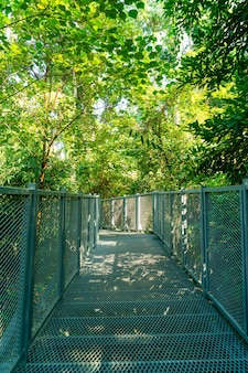 Caminhe pela floresta em canopy walk at queen sirikit jardim botânico chiang mai, tailândia