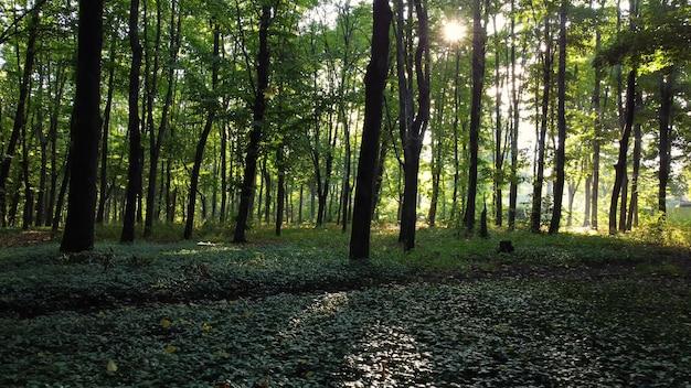 Caminhe pela floresta verde pela manhã com o nascer do sol.