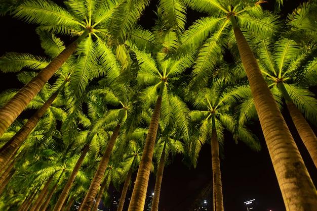 Caminho a pé com coqueiros ao lado de parques e ao ar livre da marina bay singapore