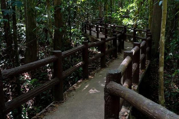 Caminho a pé para a selva