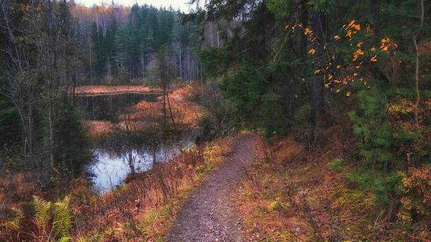 Caminho ao longo do lago na floresta colorida de outono na noite de outono em toksovo