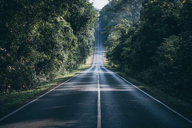 Caminho através do conceito de caminho natural da floresta outonal