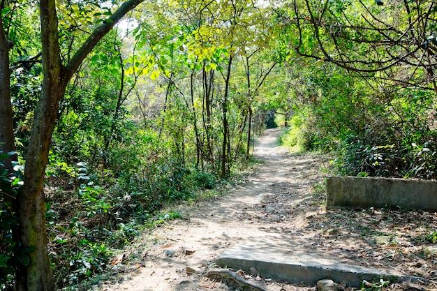 Caminho através do parque
