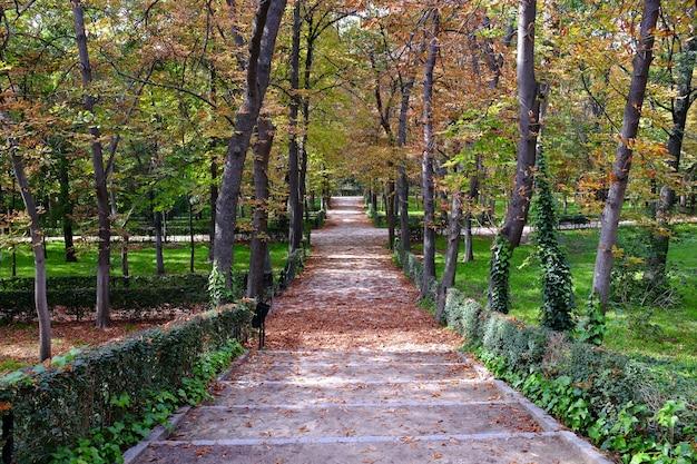 Caminho coberto de folhas caídas dentro do parque do retiro em madrid