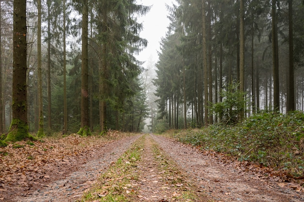 Caminho coberto de folhas no meio de uma floresta com árvores verdes