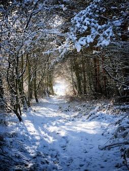 Caminho coberto de neve e cercado por árvores no parque
