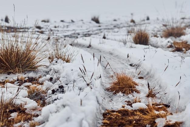 Caminho coberto de neve e grama seca no inverno