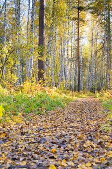 Caminho com folhagem caída em floresta selvagem de outono