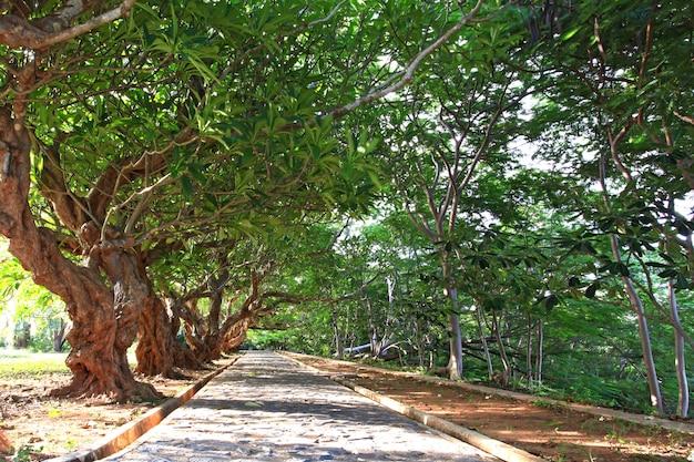 Caminho da árvore
