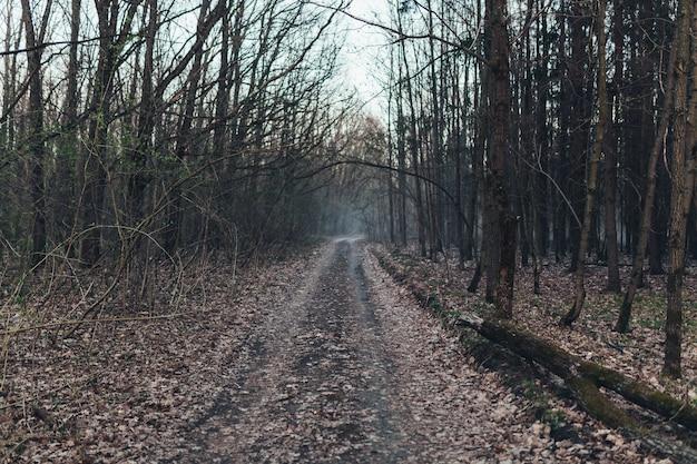 Caminho da floresta escura assustador na noite surreal halloween