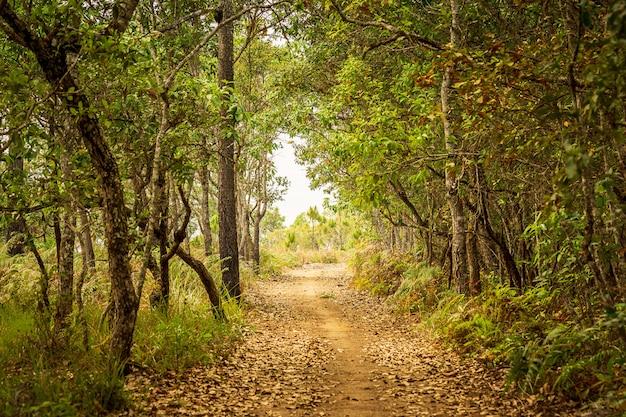 Caminho da natureza no fundo do túnel de floresta