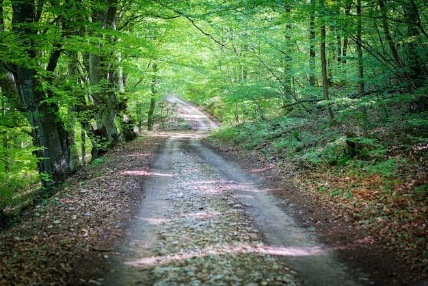Caminho de asfalto bonito na floresta