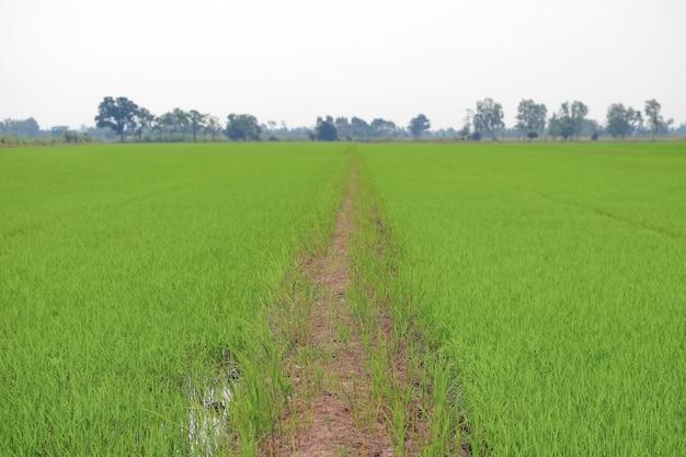 Caminho de caminhada do solo em campos verdes
