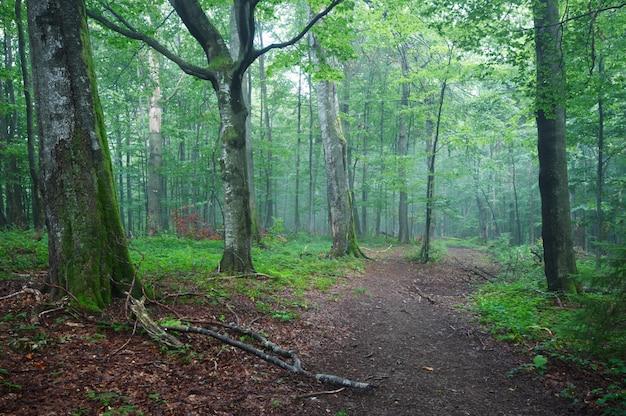 Caminho de estrada de terra através da floresta