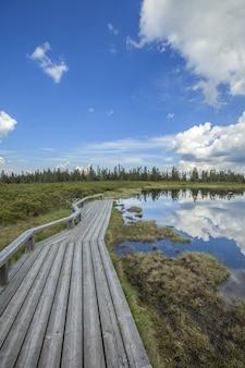 Caminho de madeira ao lado do lago ribnica na eslovênia