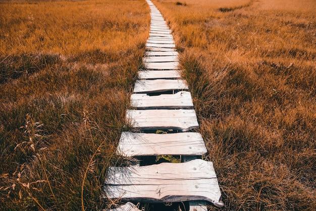 Caminho de madeira branco entre o campo de grama marrom durante o dia
