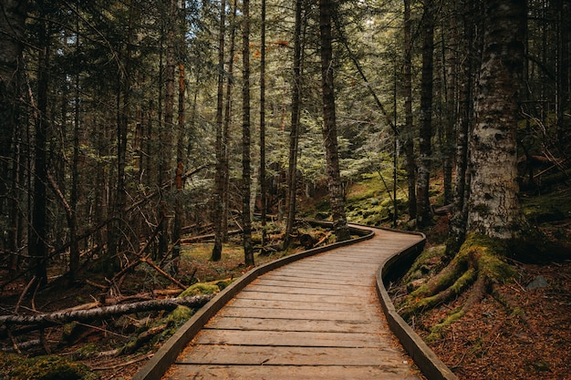 Caminho de madeira dentro de uma floresta