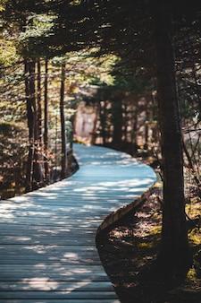 Caminho de madeira entre árvores
