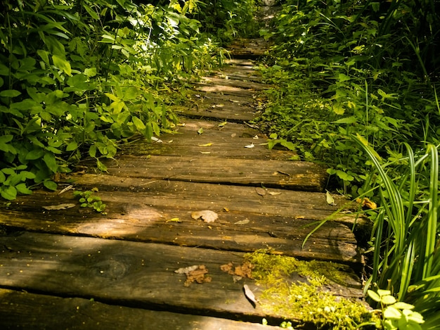 Caminho de madeira na grama closeup lindo fundo de placas antigas na vegetação
