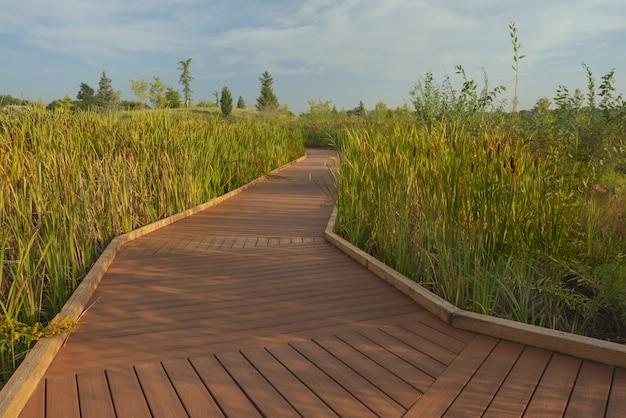 Caminho de madeira no meio de um campo gramado alto, com árvores à distância sob um céu azul