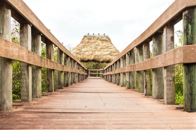 Caminho de madeira no pântano em everglades, flórida
