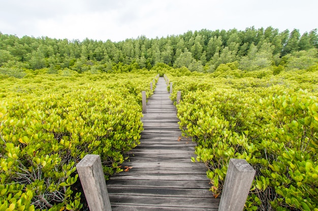 Caminho de madeira que leva direto para a floresta