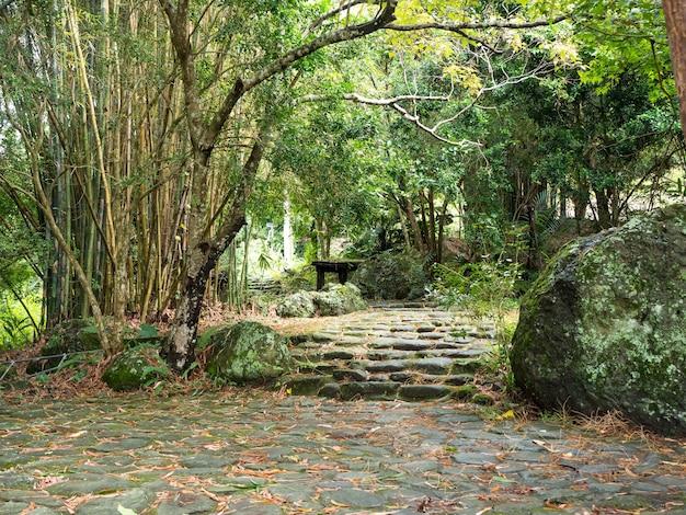 Caminho de pedra com árvores de bambu no jardim de outono