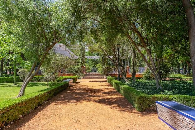 Caminho de pedra de tijolo laranja no parque com árvores e ligustro nas laterais. saúde do conceito, estrada, tranquilidade.