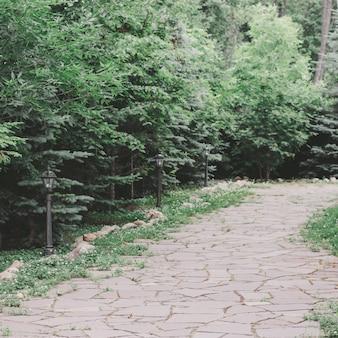 Caminho de pedra entre abetos e arbustos em um parque sem pessoas