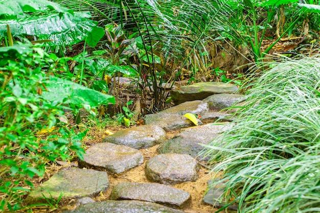Caminho de pedra no parque tropical.