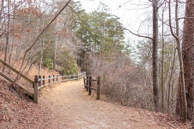 Caminho dentro da floresta com cercas de madeira