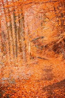 Caminho dentro de uma floresta no outono