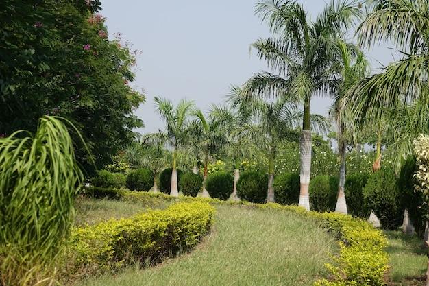 Caminho do gramado com palmeiras