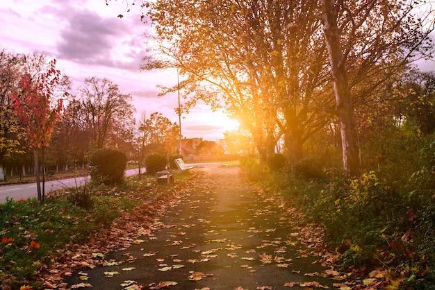Caminho do parque de outono ao anoitecer brilha após a chuva