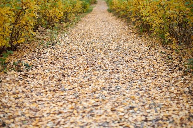 Caminho do parque outono. beco da bela floresta com folhas caídas. tempo calmo. tempo de mudança de temporada. ninguém.
