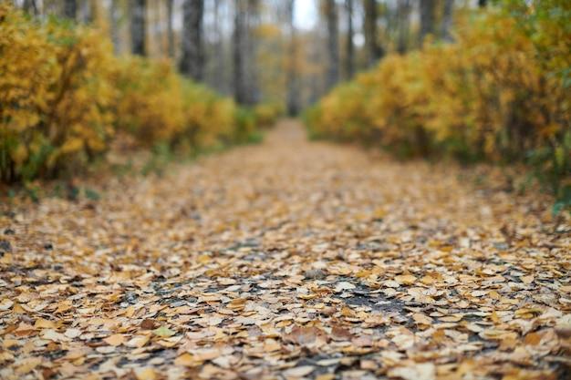 Caminho do parque outono