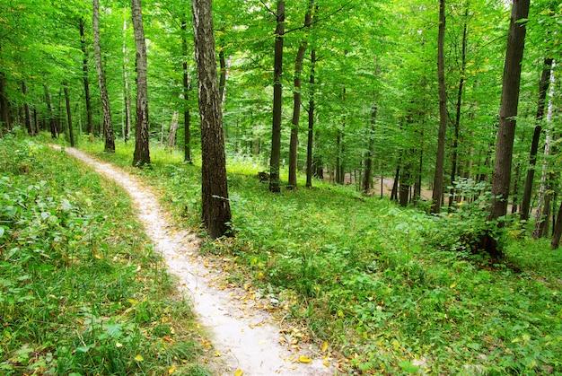 Caminho e árvore da floresta