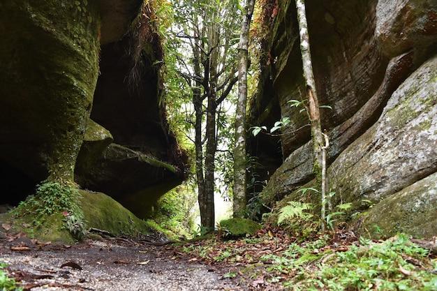 Caminho e árvore na floresta para plano de fundo natural
