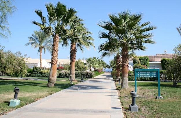 Caminho e palmeiras no território do hotel sheraton no egito