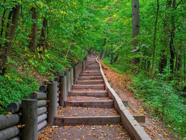 Caminho ecológico verde vazio no outono, vista de baixo para cima. moscou, vorobyovy gory.