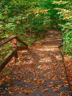 Caminho ecológico verde vazio no outono, vista de cima para baixo. moscou.