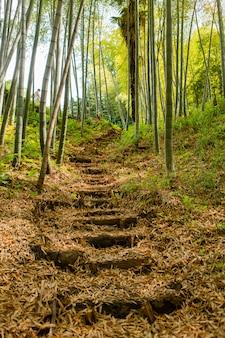 Caminho em um bosque de bambu no verão