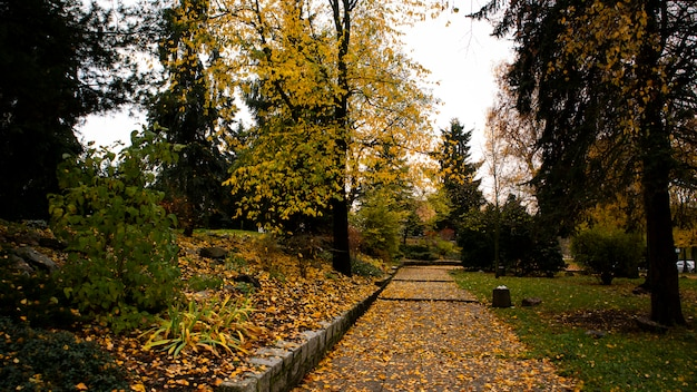 Caminho em um parque no outono com folhas amarelas caindo de árvores e cobrindo o chão