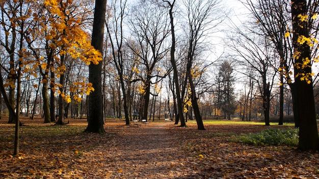 Caminho em um parque no outono com folhas amarelas caindo de árvores