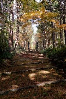 Caminho em uma floresta cercada por árvores cobertas de folhas coloridas no outono