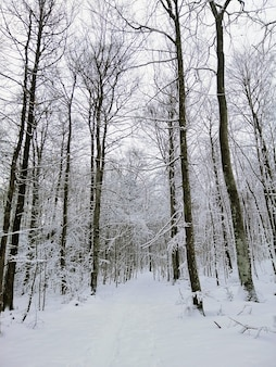 Caminho em uma floresta cercada por árvores cobertas pela neve em larvik, na noruega