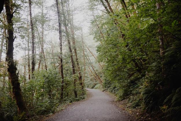 Caminho em uma floresta cercada por árvores e arbustos sob a luz do sol
